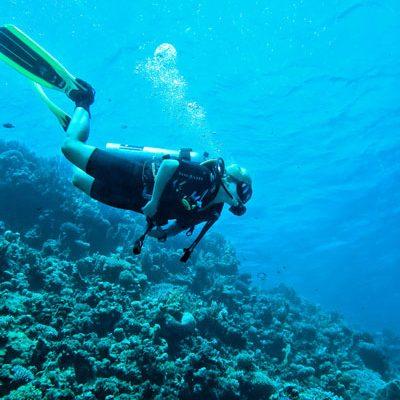 ספארי צלילה